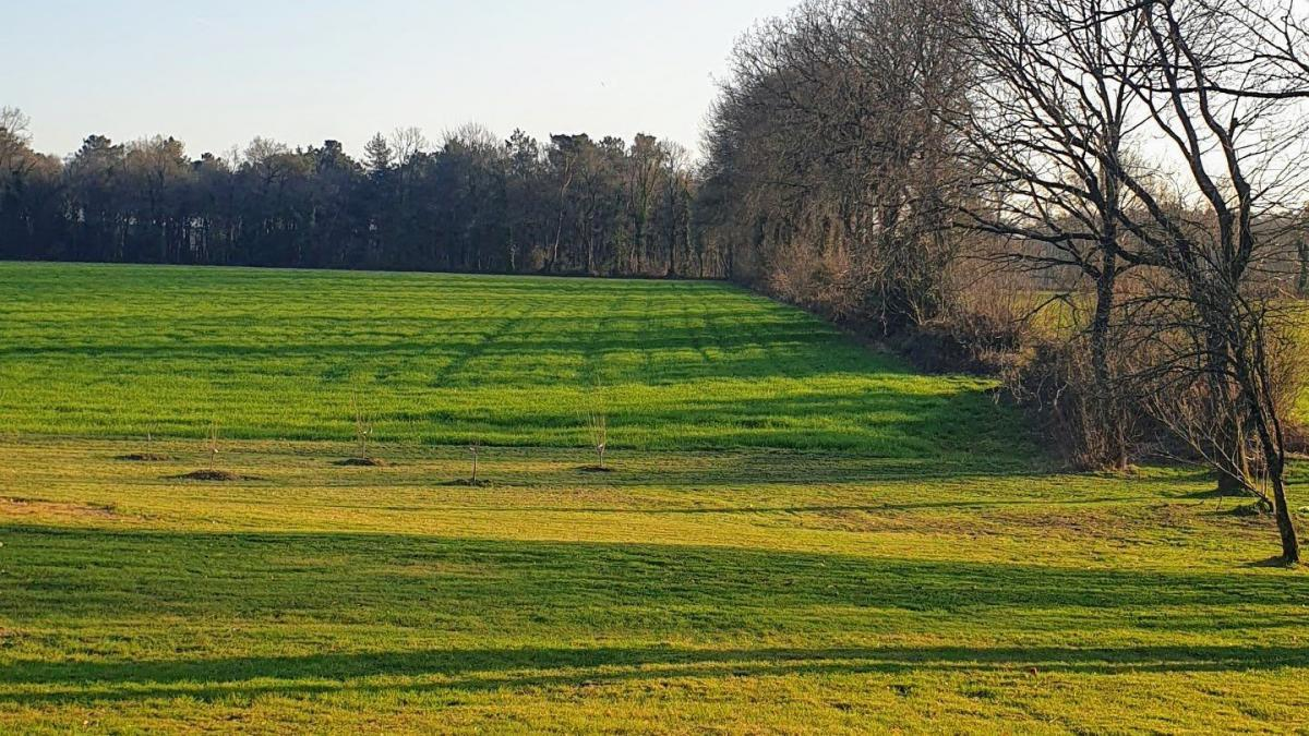 Large building plot with trees 15 km from Vannes